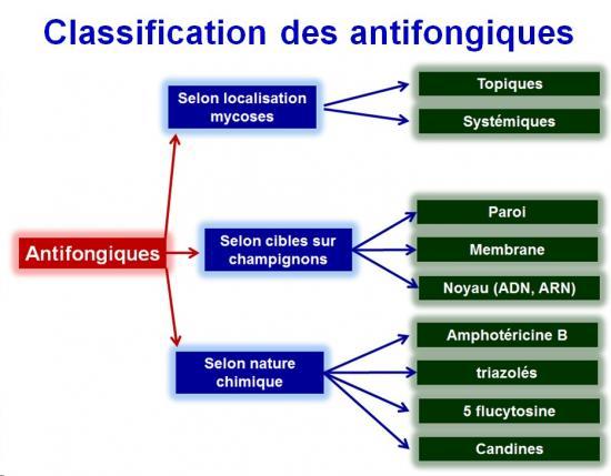Antifongiques 7