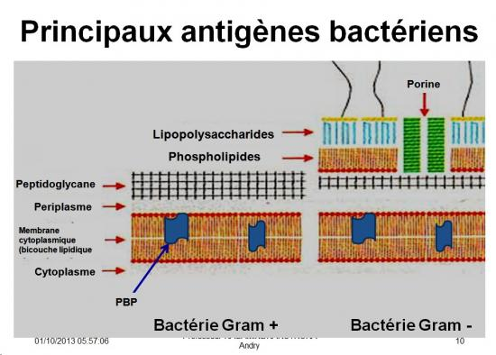 Antigènes bactériens 3
