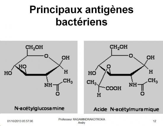 Antigènes bactériens 5