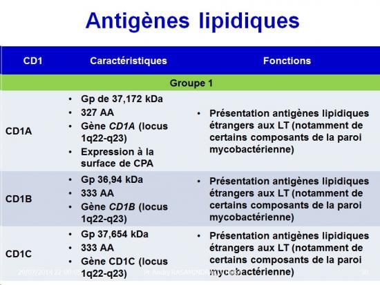 Apprêtement - processing antigène (30)