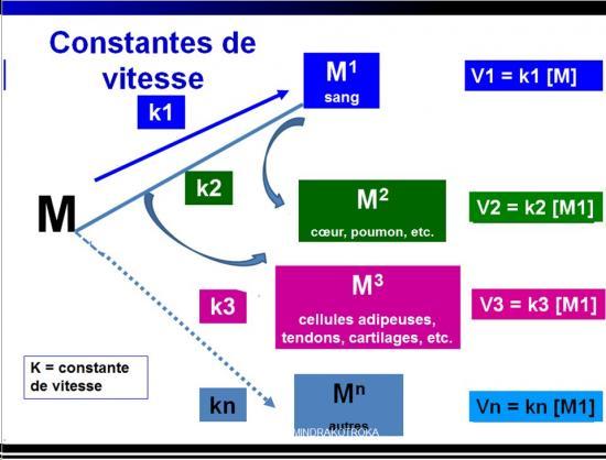 Biodisponiblité et bioéquivalence des médicaments 10