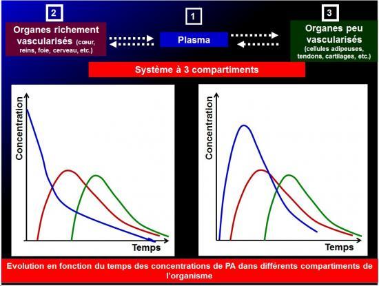 Biodisponiblité et bioéquivalence des médicaments 9