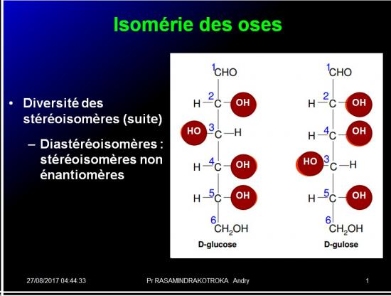 Biomolécules glucidiques 13