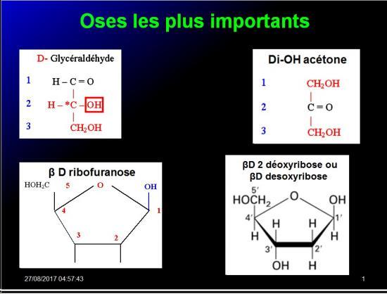 Biomolécules glucidiques 28