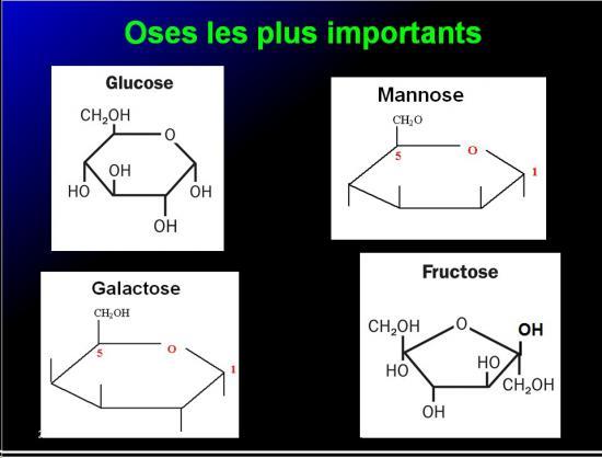 Biomolécules glucidiques 29