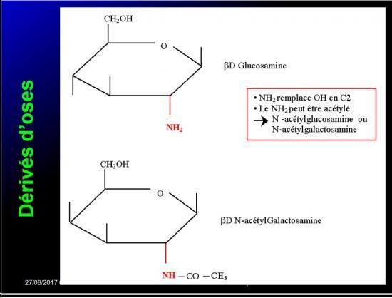 Biomolécules glucidiques 31
