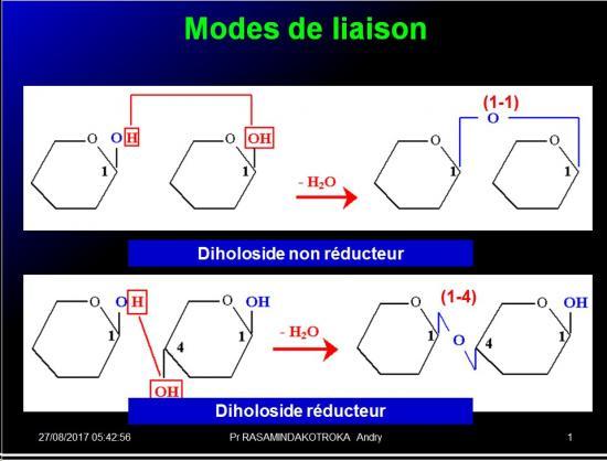 Biomolécules glucidiques 36