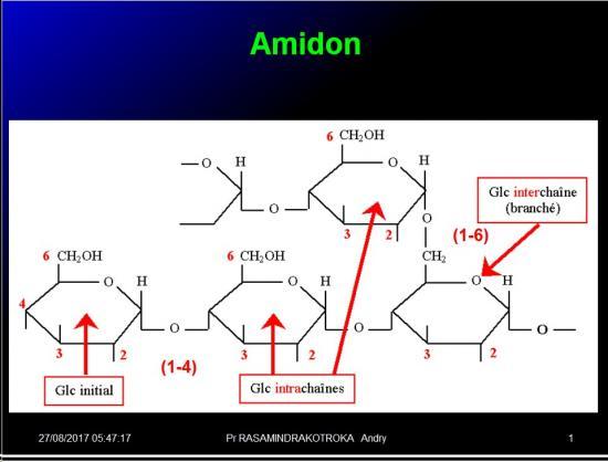 Biomolécules glucidiques 41