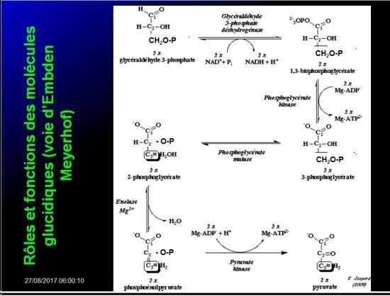 Biomolécules glucidiques 57