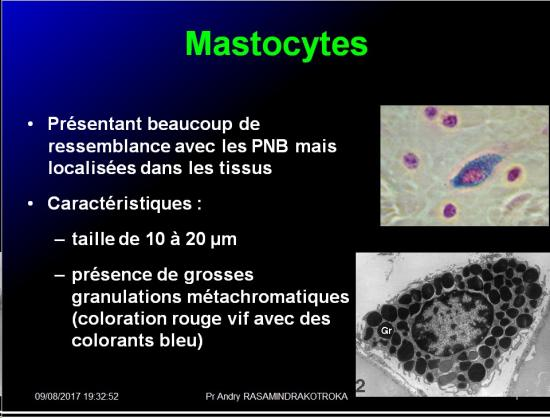 Cellules de l'immunité 12