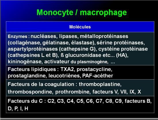 Cellules de l'immunité 17