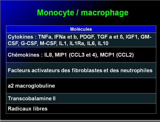 Cellules de l'immunité 18