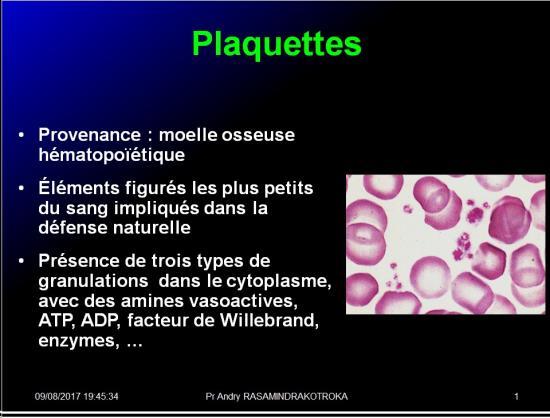 Cellules de l'immunité 26