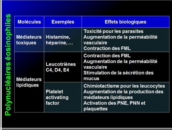 Cellules de l'immunité 7