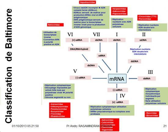 Classification et taxonomie des virus 5
