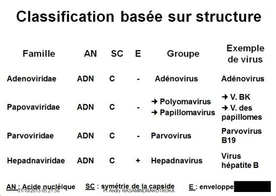 Classification et taxonomie des virus 7
