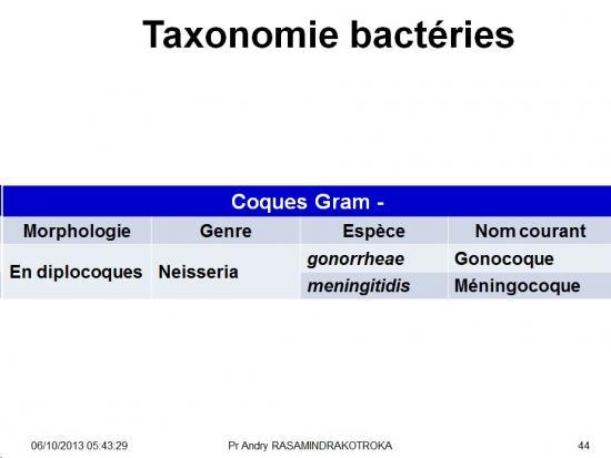 Classification - taxonomie des bactéries 7