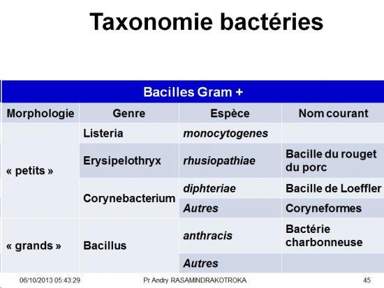Classification - taxonomie des bactéries 8