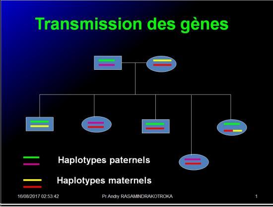 Complexe majeur d'histocompatibilité humain 16