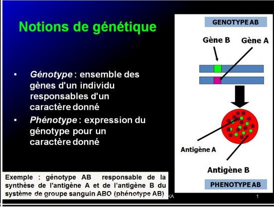 Complexe majeur d'histocompatibilité humain 8