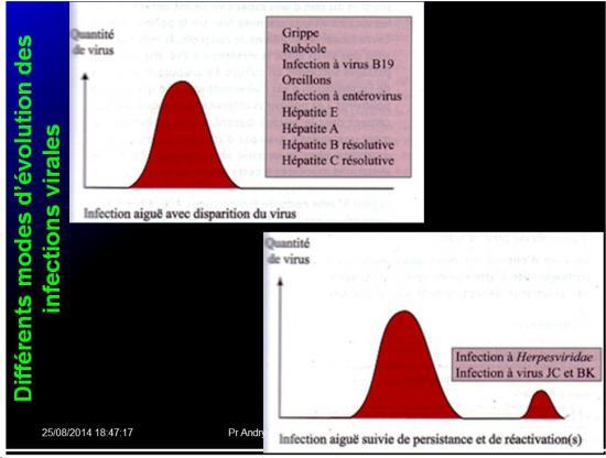 Evolution des virus dans l'organisme 17