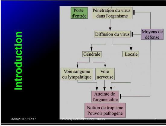 Evolution des virus dans l'organisme 2