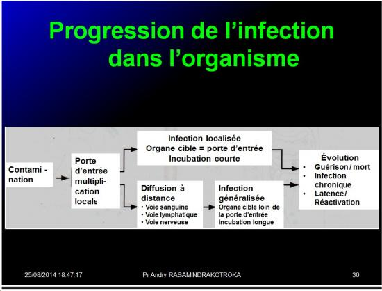 Evolution des virus dans l'organisme 4