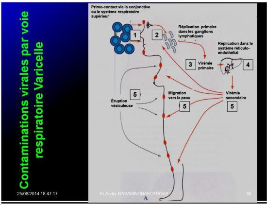 Evolution des virus dans l'organisme 5