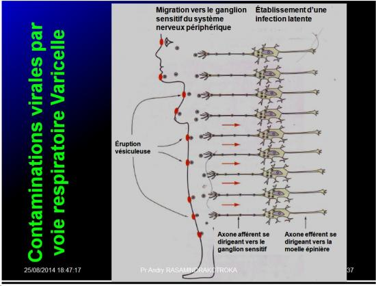 Evolution des virus dans l'organisme 6