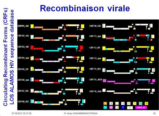 Génétique virale 13
