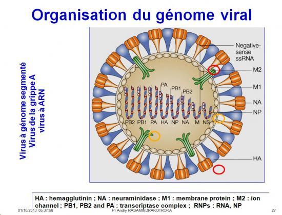 Génétique virale 3