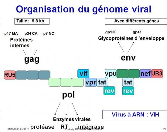 Génétique virale 5