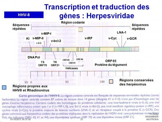Génétique virale 8