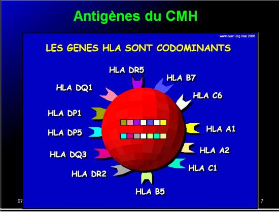 Images sélectikonnées immunité et greffe7