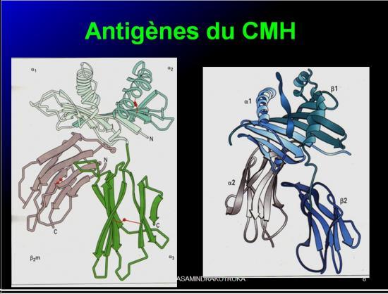 Images sélectikonnées immunité et greffe8