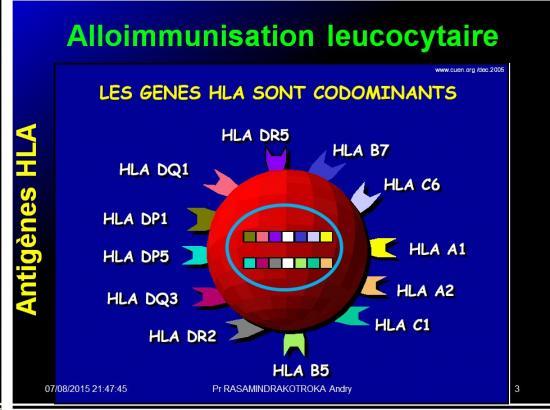 Images sélectionnées alloimmunisations foetomaternelles3