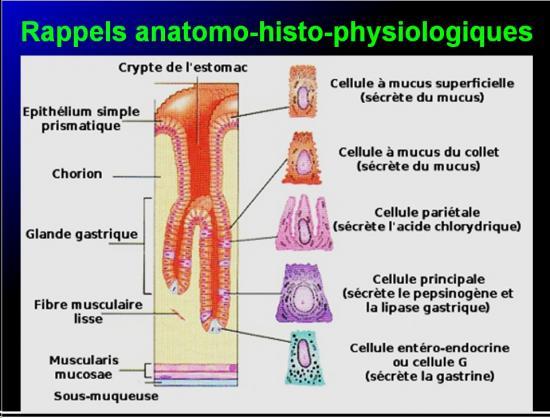 Images sélectionnées Antiulcéreux gastroduodénaux6