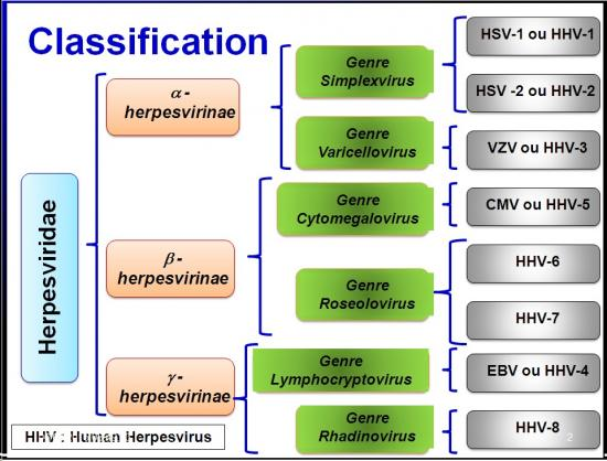 Images selectionnées Herpesviridae2