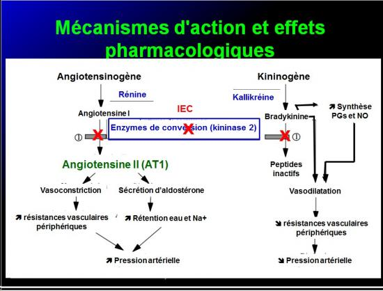 Images sélectionnées IEC et inhibiteurs AT1 6