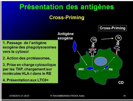 Images sélectionnées immunité antitumorale5