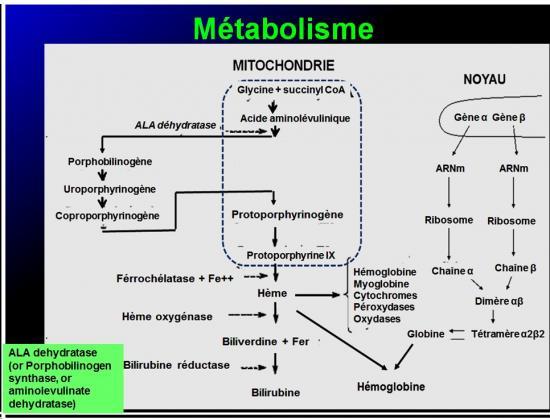 Images sélectionnées médicaments antianémiques10
