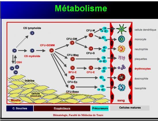 Images sélectionnées médicaments antianémiques11