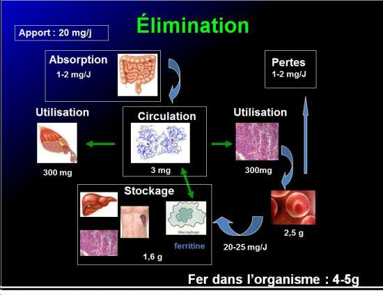 Images sélectionnées médicaments antianémiques12