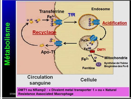 Images sélectionnées médicaments antianémiques9