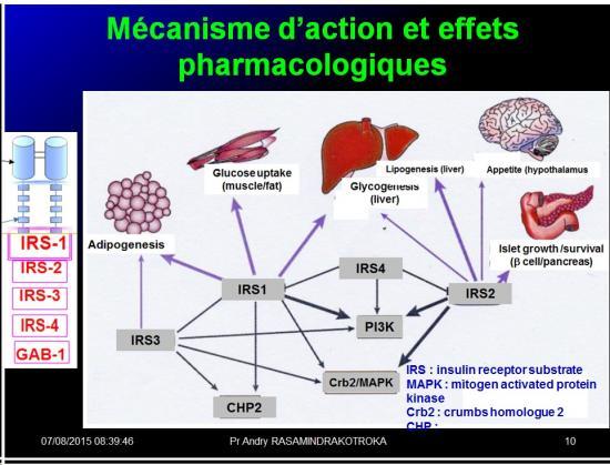 Images sélectionnées Médicaments antidiabétiques10