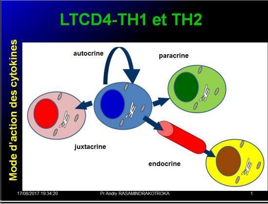 Immunité adaptative 19