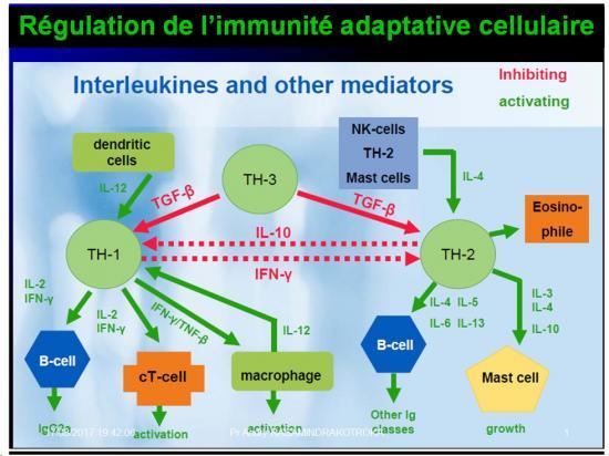 Immunité adaptative 27