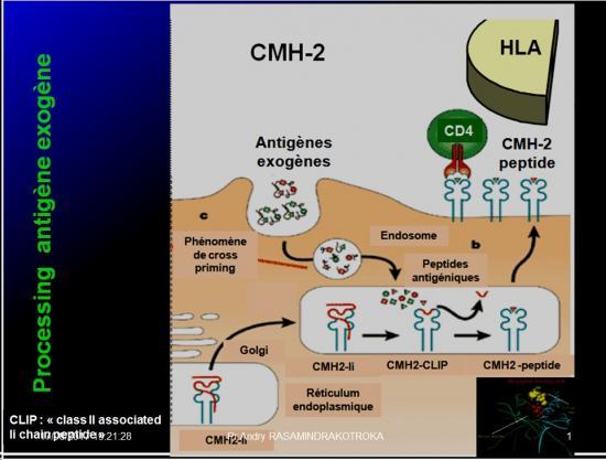 Immunité adaptative 5
