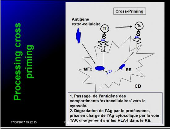 Immunité adaptative 6