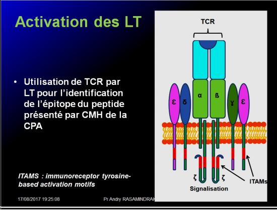Immunité adaptative 9